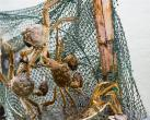 蘇州陽澄湖吃大閘蟹的地方在哪里 哪家好