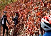 賞華北面積最大野生黃櫨紅葉,逛山貨大集,房山坡峰嶺等你來!