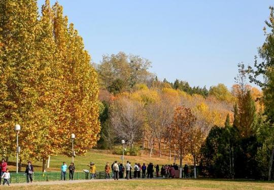北京北部山区红叶已进入最佳观赏期