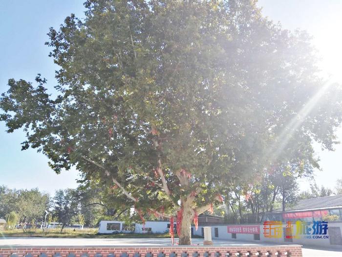 粉色花海正盛开!海淀青龙桥二河开21号艺术区最全游玩指南来啦![墙根网]