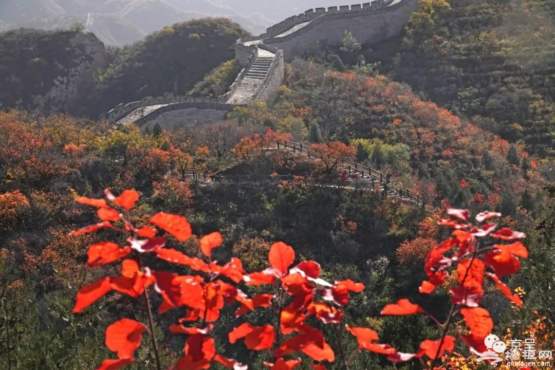 """不必扎堆去香山!北京这些赏""""红""""好去处我们带您看[墙根网]"""