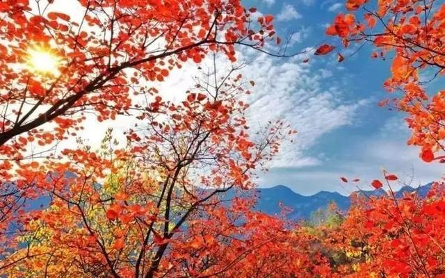京郊红叶进入最佳观赏期,平谷金海湖红叶节开幕[墙根网]