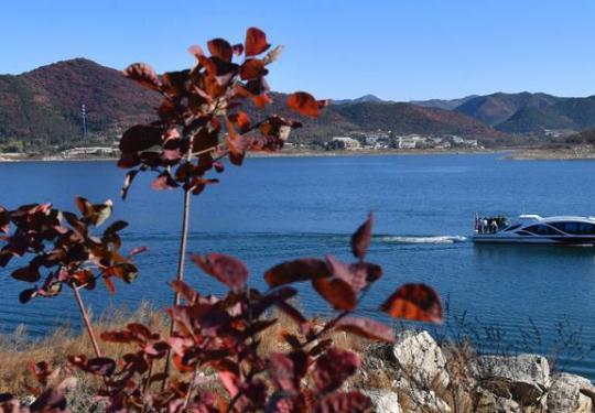 京郊红叶进入最佳观赏期,平谷金海湖红叶节开幕