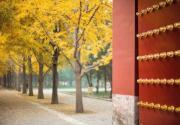 2020北京地壇公園銀杏節攻略(時間+活動+門票)
