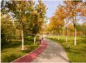 快來打卡!秋色賦予了北京市副中心一條繽紛彩帶!
