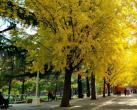 晚秋谁更美?北京市属公园今天推荐最美晚秋景色