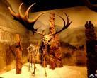 北京自然博物馆生命之美公益展(时间+介绍+亮点)