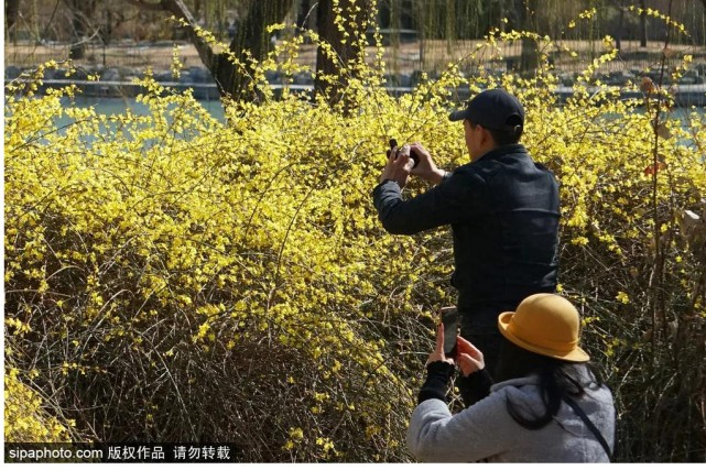 美爆了!解锁京城春天的密码,就在这些地方……[墙根网]