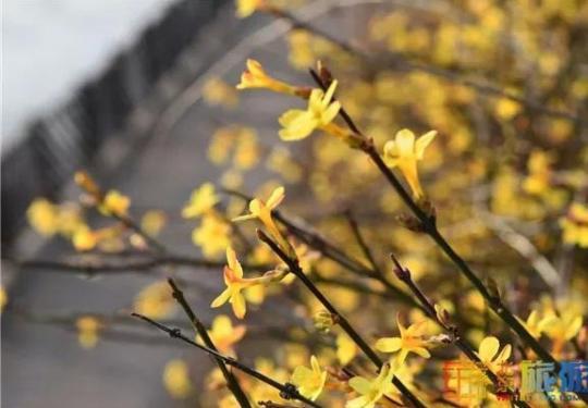 美爆了!解锁京城春天的密码,就在这些地方……