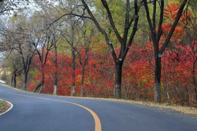最美乡村路之滦赤路——丰神俊朗的画境奇观[墙根网]