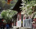 2021戒台寺第二十五届丁香旅游文化节暨第五届茶文化节将正式拉开帷幕