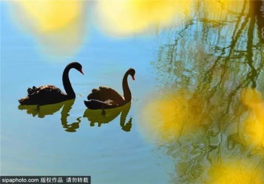 2021北京森林文化节开幕!从春天到冬天,200场活动包揽!