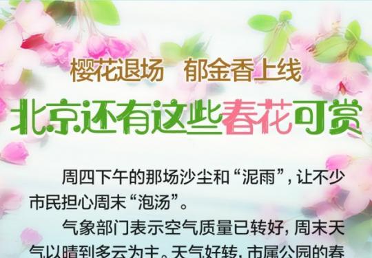 北京何处赏春花?樱花渐退场,郁金香、紫荆花、丁香碧桃正当时