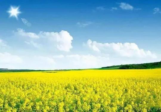 興農天力油菜花節 北京百萬花海超大規模油菜花海,4月24起浪漫來襲,同時向全民開放一同相約吧!