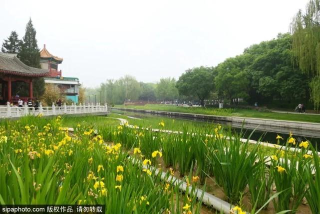 免费!这个公园因海棠出名,现在又美成另一番模样![墙根网]